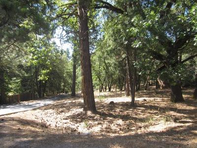 Grass Valley Residential Lots & Land For Sale: 19080 Connie Drive