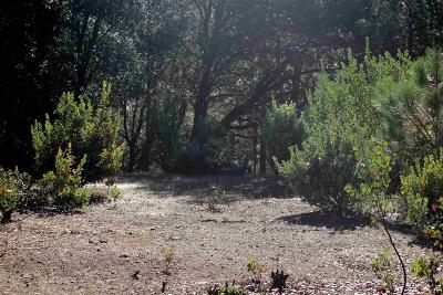 Sutter Creek Residential Lots & Land For Sale: 16200 Soke Springs Ranch Road