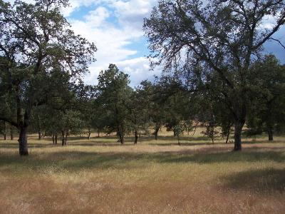 Yuba County Residential Lots & Land For Sale: 3 Turkey Hollow Trail