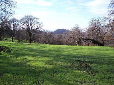 Yuba County Residential Lots & Land For Sale: 28 Wades Way