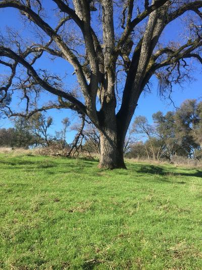 El Dorado County Residential Lots & Land For Sale: 2405 Painted Pony