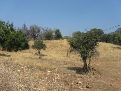 Mokelumne Hill Residential Lots & Land For Sale: State Highway 26