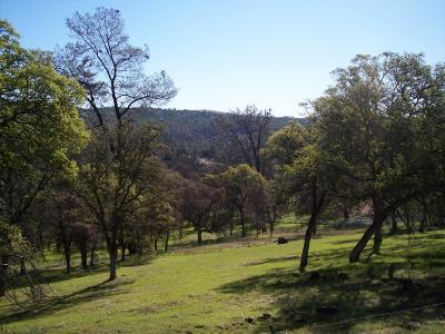 Yuba County Residential Lots & Land For Sale: 3 Deer Hollow Trail