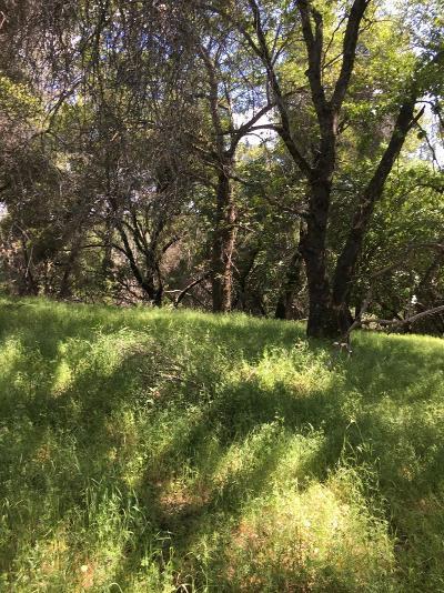 Placerville Residential Lots & Land For Sale: 5270 Mount Aukum Road