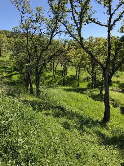 El Dorado Hills Residential Lots & Land For Sale: 1014 Via Treviso