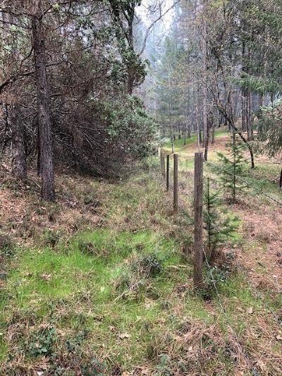 Foresthill Residential Lots & Land For Sale: 6571 Nugget Drive
