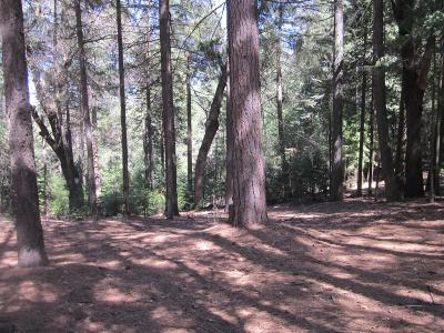 Grizzly Flats Residential Lots & Land For Sale: 5182 Pine Ridge Court
