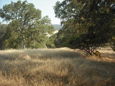 El Dorado Hills Residential Lots & Land For Sale: 800 Salmon Falls Road