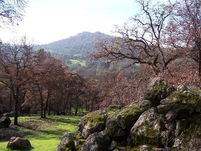Yuba County Residential Lots & Land For Sale: 19 Strong Box Court