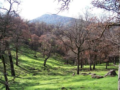 Yuba County Residential Lots & Land For Sale: 24 Wades Way
