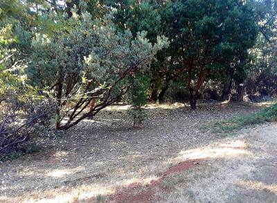 Pioneer Residential Lots & Land For Sale: 17686 South Mace Drive