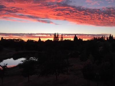 Rancho Murieta Single Family Home For Sale: 6429 Lobo Drive