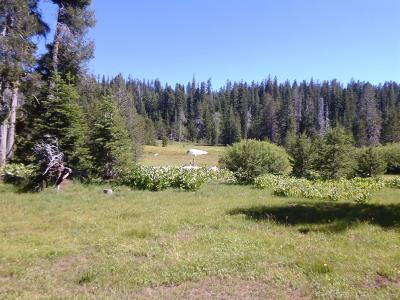 Amador County Residential Lots & Land For Sale: Forest Service Road 8n15 Road