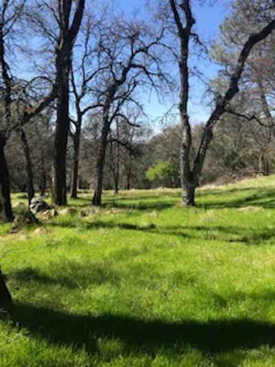 Grass Valley Residential Lots & Land For Sale: 13870 Garden Bar Road