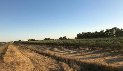 Yolo County Commercial Lots & Land For Sale: 19600 County Road 95