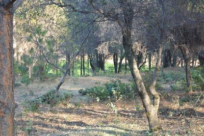 Placer County Residential Lots & Land For Sale: 1632 The Point Road Lot 296