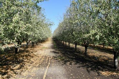 Oakdale CA Commercial Lots & Land For Sale: $14,218,500