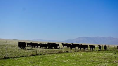 Commercial Lots & Land For Sale: Little Panoche Road