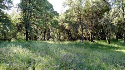Placerville CA Residential Lots & Land For Sale: $285,000