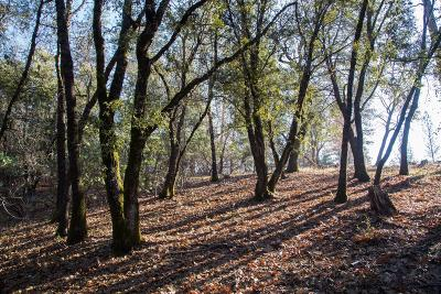Colfax Residential Lots & Land For Sale: Emery Lane