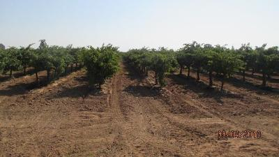 San Joaquin County Commercial Lots & Land For Sale: 12901 Kettleman Lane