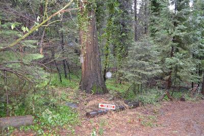 Pollock Pines Residential Lots & Land For Sale: 2831 Pine Court
