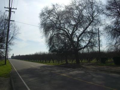 Modesto Single Family Home For Sale: 5631 Carver Road