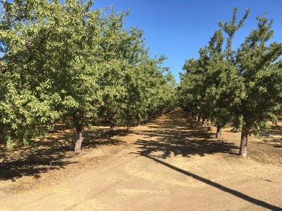 Yolo County Commercial Lots & Land For Sale: 17795 County Road 86