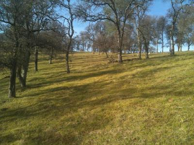 Residential Lots & Land For Sale: Avacado Road