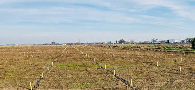 San Joaquin County Commercial Lots & Land For Sale: 3051 West Toleri Road