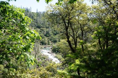 Placer County Residential Lots & Land For Sale: Bear Canyon Lot #52