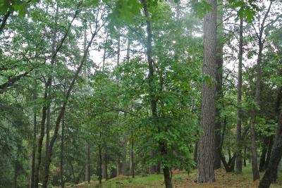 Foresthill Residential Lots & Land For Sale: 6451 Green Pine Court