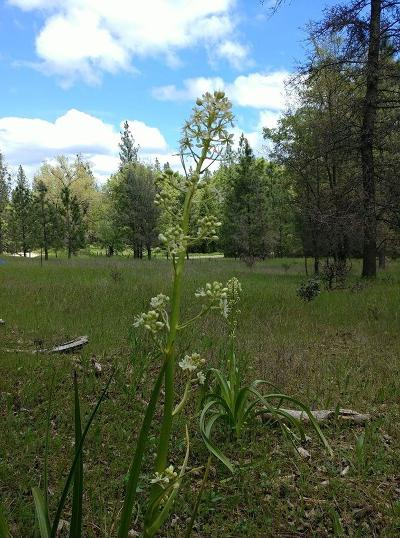 Pine Grove Residential Lots & Land For Sale: 21484 Homestead