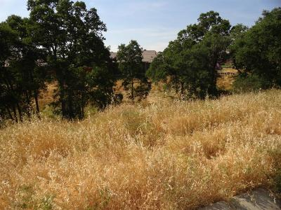 Valley Springs Residential Lots & Land For Sale: 488 Woodgate