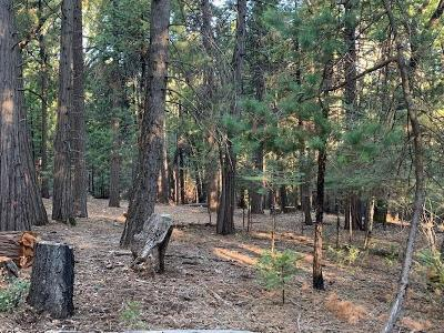 Volcano Residential Lots & Land For Sale: 19251 Golden Meadow Drive