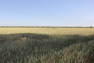 San Joaquin County Commercial Lots & Land For Sale: 1131 West Bowman Road