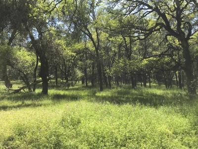 Fiddletown Residential Lots & Land For Sale: 19230 Black Oak Drive