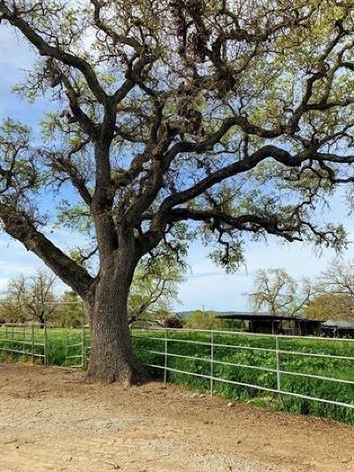 Santa Clara County Single Family Home For Sale: 1565 East Middle Avenue