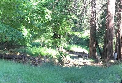 Pollock Pines Residential Lots & Land For Sale: 6201 South Bucktail Lane