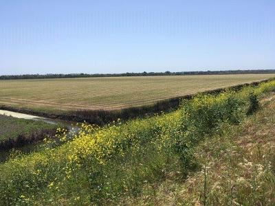 Yolo County Commercial Lots & Land For Sale: 11100 Jefferson Boulevard