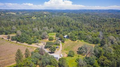 Amador County Single Family Home For Sale: 18860 American Flat Road