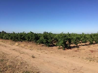 San Joaquin County Commercial Lots & Land For Sale: 11610 Acampo Road