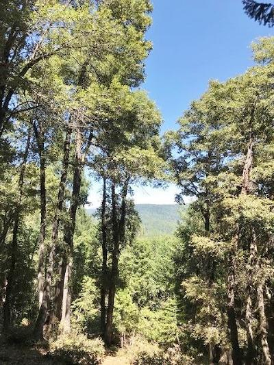 Nevada City Residential Lots & Land For Sale: 13785 Wemah Way