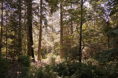 Nevada City Residential Lots & Land For Sale: 14071 Repose Lane
