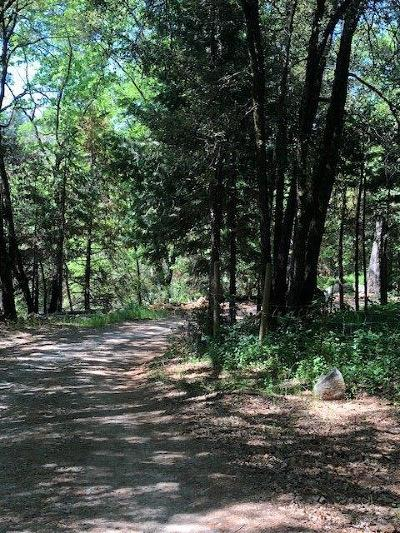 Grass Valley Residential Lots & Land For Sale: 13586 Highway 49