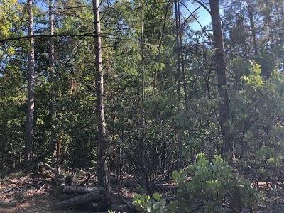 Foresthill Residential Lots & Land For Sale: 6152 Green Ridge Drive