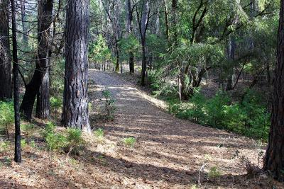 Nevada City Residential Lots & Land For Sale: 18016 Blue Tent School Road