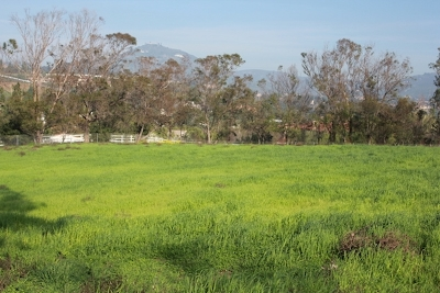Encinitas Residential Lots & Land For Sale: 3281 Poppy Hills Lane #1