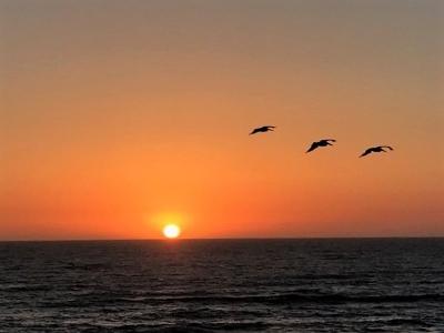 Sunset Cliffs Single Family Home For Sale: 1039 Sunset Cliffs Blvd