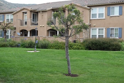 Sabre Spring, Sabre Springs Attached For Sale: 10910 Serafina Lane #57